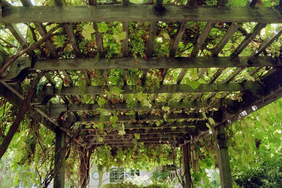 Как сделать перголы для винограда 240