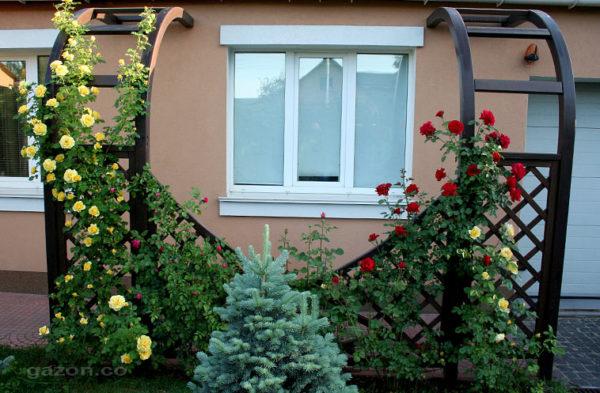 Перголы для вьющихся растений фото