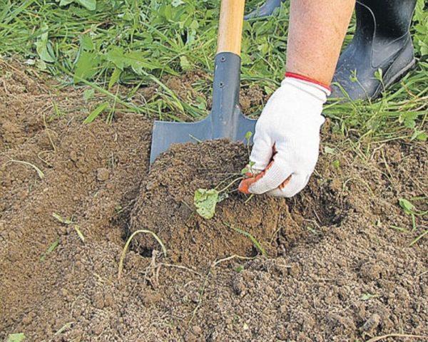 Как сделать хороший газон на даче