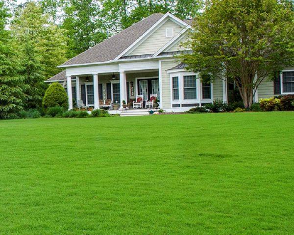 Некоторые виды газонных трав очень схожи между собой