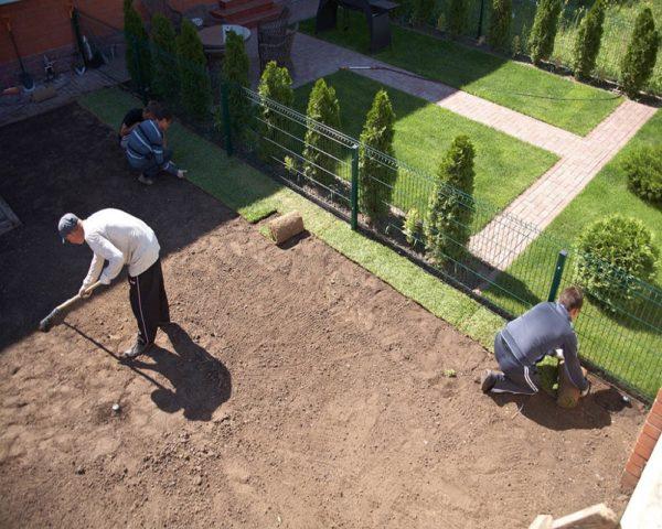 Как сделать красивый газон на даче своими руками