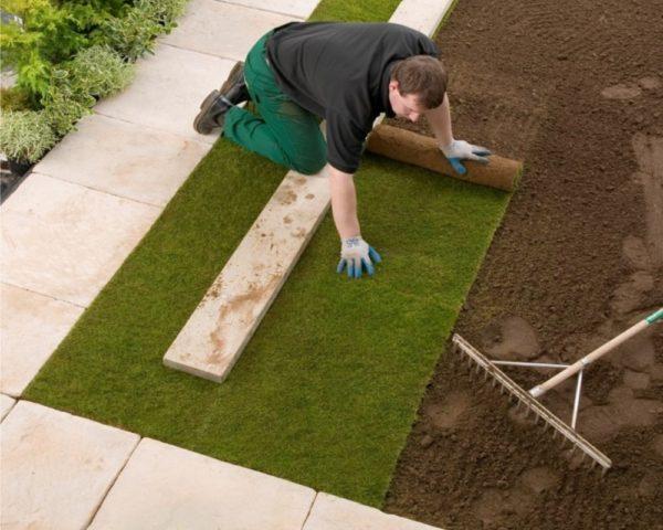 Выращивание рулонного газона