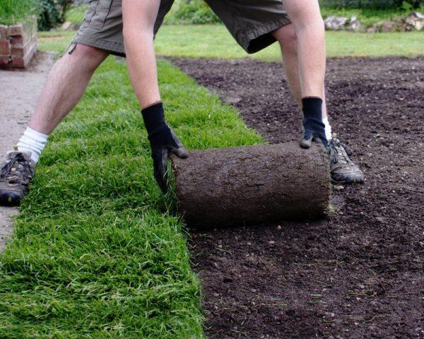 Рулонные газонные травы виды зависят от типа травы