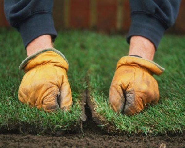 Рулонный газон укладка своими руками