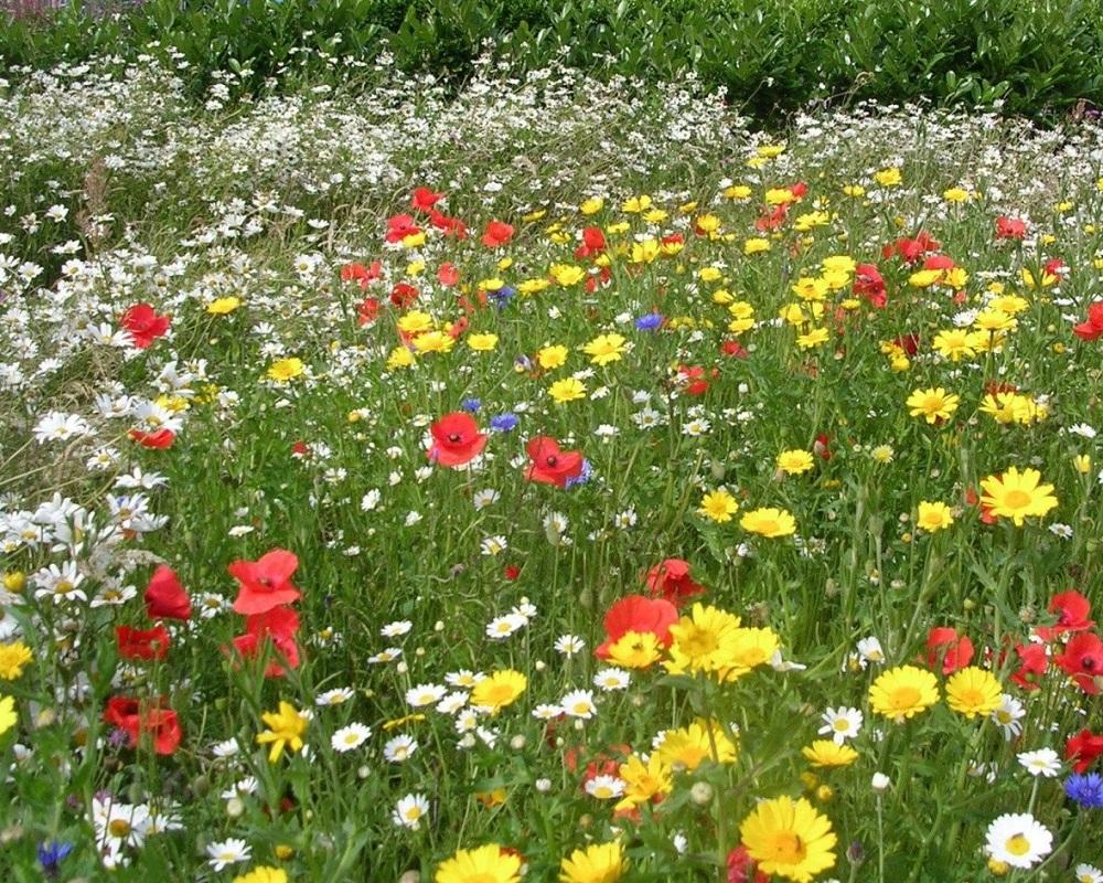 выходят две а на україні розквітають сади платит ваш регион