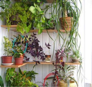 Делаем полки и ящики для цветов на балкон совет мастера.